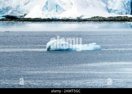 Antarctica - Lamaire Channel. One little Adélie penguin  on a bergy bit or very small iceberg. The wind causes all the very small ripples in an otherw - Stock Photo