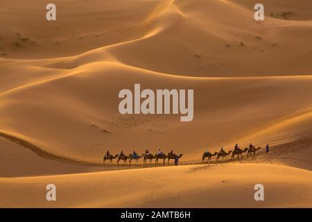 Camel procession in the desert in Merzouga, Morocco - Stock Photo