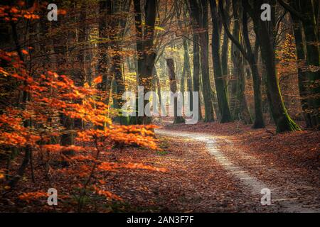 Sandy path in the forest with golden emerald autumn leaves in the rays of the setting sun - Stock Photo