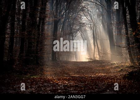 Early moring stroll trough autunm forest. Quite time to admire the nature, listen only to sounds of dried leaves under your shoes. - Stock Photo