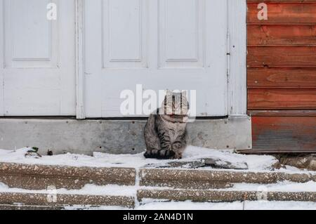 Domestic cat sitting on a porch. Near perfect furry cat. - Stock Photo