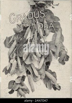 Dreer's market gardeners' wholesale price list : reliable vegetable seeds, flower seeds, garden requisites, implements, insecticides, etc . 20 HENRY A. DREER, 714 Chestnut Street, Philadelphia, Pa SEED POTATOES. - Stock Photo