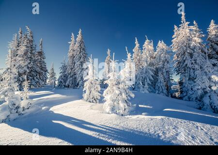 Majestic winter landscape glowing by sunlight. Dramatic wintry scene. Carpathian, Ukraine, Europe. Beauty world. Happy New Year! - Stock Photo