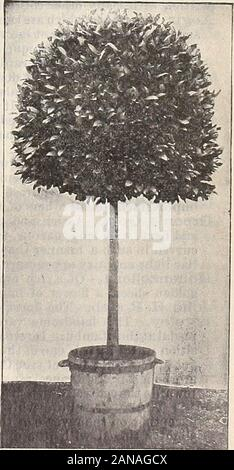 Dreer's quarterly wholesale price list : tools, fertilizers, insecticides, sundries, etc . Pyramidal-shaped Bay.. STANDARD OR TREE-SHAPED BAY. HENHY A. DREER, 714 Chestnut Street, Philadelphia, Pa. New... DAHLIAS. - Stock Photo