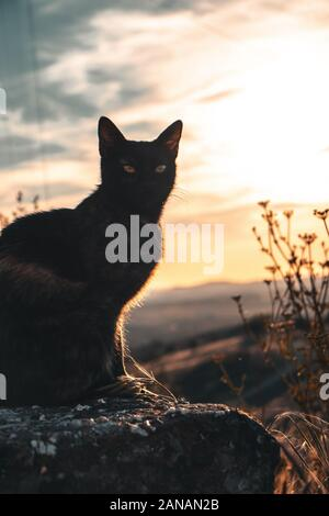 Cat Looking During Sunset - Stock Photo