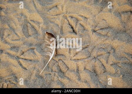 Traces of birds on the sea coast;