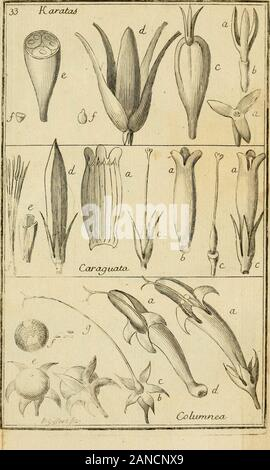 Nova plantarum americanarum genera . - Stock Photo