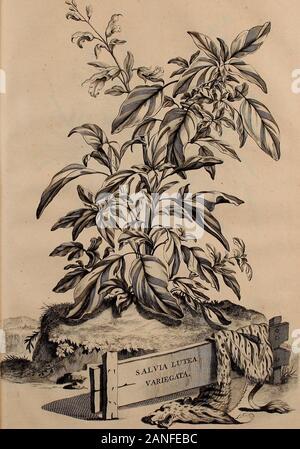 Naauwkeurige beschryving der aardgewassen, waar in de veelerley aart en bijzondere eigenschappen der boomen, heesters, kruyden, bloemen, met haare vrugten, zaden, wortelen en bollen, neevens derzelver waare voort-teeling, gelukkige aanwinning, en heylzaame genees-krachten ..beschreeven worden; . Fol, 8 ;. / ^•?w Fol.858. - Stock Photo