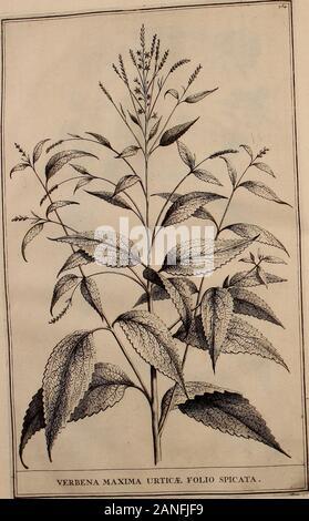 Naauwkeurige beschryving der aardgewassen, waar in de veelerley aart en bijzondere eigenschappen der boomen, heesters, kruyden, bloemen, met haare vrugten, zaden, wortelen en bollen, neevens derzelver waare voort-teeling, gelukkige aanwinning, en heylzaame genees-krachten ..beschreeven worden; . Bol.jSf., - Stock Photo