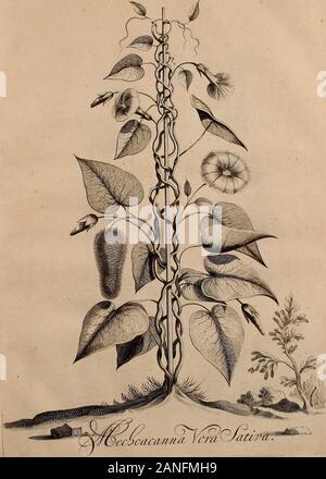 Naauwkeurige beschryving der aardgewassen, waar in de veelerley aart en bijzondere eigenschappen der boomen, heesters, kruyden, bloemen, met haare vrugten, zaden, wortelen en bollen, neevens derzelver waare voort-teeling, gelukkige aanwinning, en heylzaame genees-krachten ..beschreeven worden; . 7f3.. JFoL 7 ? - Stock Photo