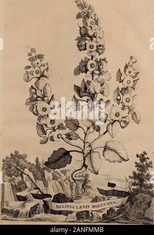 Naauwkeurige beschryving der aardgewassen, waar in de veelerley aart en bijzondere eigenschappen der boomen, heesters, kruyden, bloemen, met haare vrugten, zaden, wortelen en bollen, neevens derzelver waare voort-teeling, gelukkige aanwinning, en heylzaame genees-krachten ..beschreeven worden; . MELIS SA VARIEGATA. 7f3. - Stock Photo