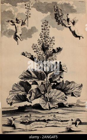 Naauwkeurige beschryving der aardgewassen, waar in de veelerley aart en bijzondere eigenschappen der boomen, heesters, kruyden, bloemen, met haare vrugten, zaden, wortelen en bollen, neevens derzelver waare voort-teeling, gelukkige aanwinning, en heylzaame genees-krachten ..beschreeven worden; . :77y. &-*yj Fr/. ? . - Stock Photo