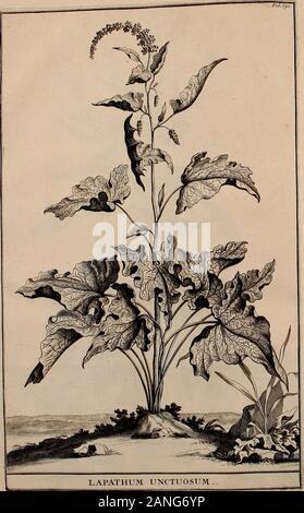 """Naauwkeurige beschryving der aardgewassen, waar in de veelerley aart en bijzondere eigenschappen der boomen, heesters, kruyden, bloemen, met haare vrugten, zaden, wortelen en bollen, neevens derzelver waare voort-teeling, gelukkige aanwinning, en heylzaame genees-krachten ..beschreeven worden; . «?* Fot.6 ,<""""• - Stock Photo"""
