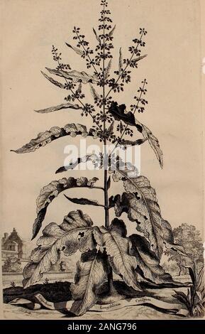 Naauwkeurige beschryving der aardgewassen, waar in de veelerley aart en bijzondere eigenschappen der boomen, heesters, kruyden, bloemen, met haare vrugten, zaden, wortelen en bollen, neevens derzelver waare voort-teeling, gelukkige aanwinning, en heylzaame genees-krachten ..beschreeven worden; . ttl.fyc. - Stock Photo
