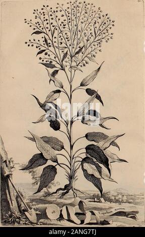 Naauwkeurige beschryving der aardgewassen, waar in de veelerley aart en bijzondere eigenschappen der boomen, heesters, kruyden, bloemen, met haare vrugten, zaden, wortelen en bollen, neevens derzelver waare voort-teeling, gelukkige aanwinning, en heylzaame genees-krachten ..beschreeven worden; . ttl.fyc - Stock Photo