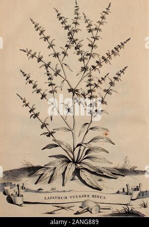 Naauwkeurige beschryving der aardgewassen, waar in de veelerley aart en bijzondere eigenschappen der boomen, heesters, kruyden, bloemen, met haare vrugten, zaden, wortelen en bollen, neevens derzelver waare voort-teeling, gelukkige aanwinning, en heylzaame genees-krachten ..beschreeven worden; . Fol.Spo.. - Stock Photo