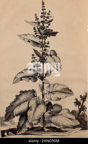 Naauwkeurige beschryving der aardgewassen, waar in de veelerley aart en bijzondere eigenschappen der boomen, heesters, kruyden, bloemen, met haare vrugten, zaden, wortelen en bollen, neevens derzelver waare voort-teeling, gelukkige aanwinning, en heylzaame genees-krachten ..beschreeven worden; . FoLfyo.. ?^u.j-jS. - Stock Photo