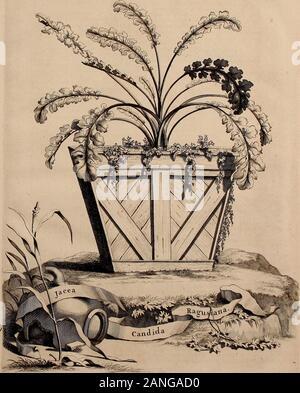 Naauwkeurige beschryving der aardgewassen, waar in de veelerley aart en bijzondere eigenschappen der boomen, heesters, kruyden, bloemen, met haare vrugten, zaden, wortelen en bollen, neevens derzelver waare voort-teeling, gelukkige aanwinning, en heylzaame genees-krachten ..beschreeven worden; . Foi. t>JJ.. - Stock Photo
