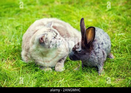 Siamese cat and brown rabbit sitting together on the green grass in the summer garden. Easter concept - Stock Photo