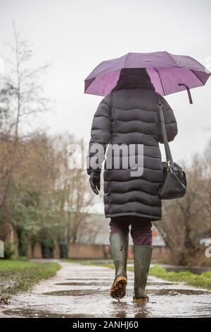 Kidderminster, UK. 17th January, 2019. UK weather: with absolutely no let up in the wet weather, water levels are on the rise and even pavements are flooded forcing pedestrians to resort to their wellington boots. A woman with umbrella, rear view, is seen here isolated walking through the puddles in her wellies along a canal towpath in the rain. The month of January is proving to be a wet, dreary start to the new year. Credit: Lee Hudson/Alamy Live News - Stock Photo
