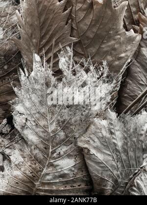 Detail of decaying leaves in Tanjung Puting National Park Stock Photo