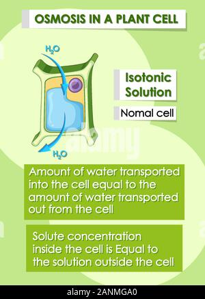 Diagram showing plant cell osmosis concept illustration ...