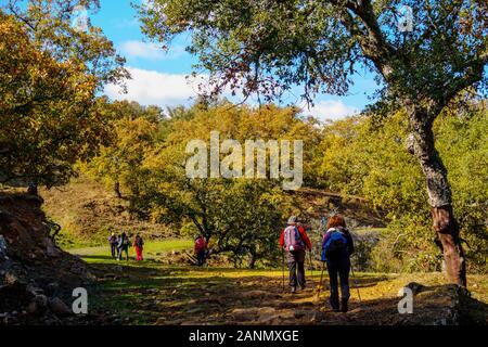 Hikers doing a nature walk between cork oaks. Natural Park Sierra de Grazalema, Cadiz province, southern Andalusia. Spain Europe