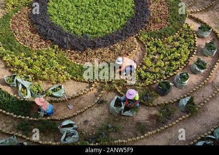Women work on planting a garden pattern at the pedestrian overpass in Quarry Bay Park in Hong Kong.