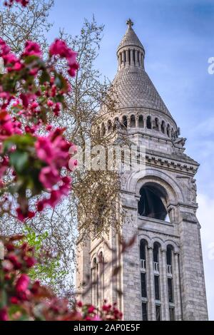 View of Basilica Sacre Coeur in Montmartre in Paris, France. Spring time with cherry blossom trees in the morning. - Stock Photo