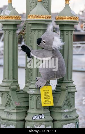 A toy Koala Bear clings on to Westminster Bridge, London, England. Highlighting the loss of animal life in the recent devastationg bush fires which hi