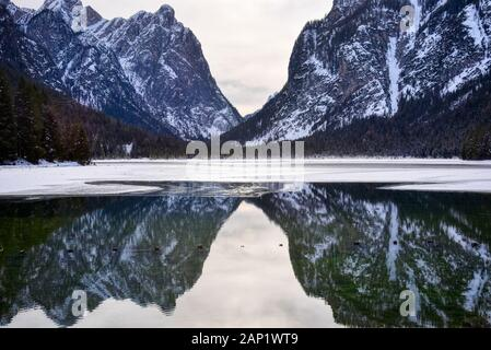 The mountains of the valley are reflected in the not frozen part of the lake of Dobbiaco - Stock Photo