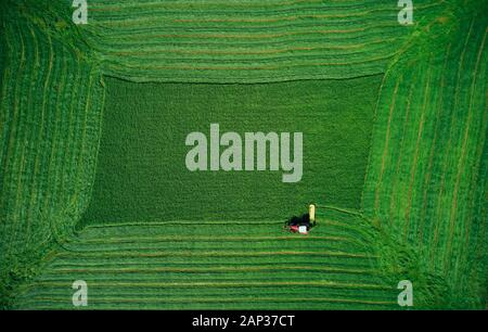 From above compact powerful red tractor plowing green bright wheat field in bright day - Stock Photo