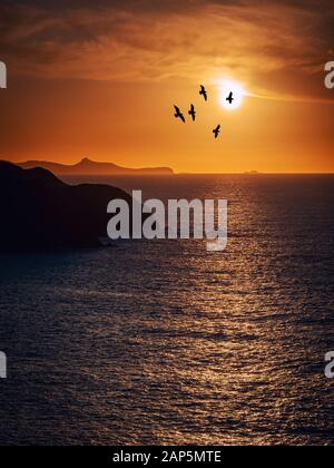 Silhouette of seagulls flying at sunset in Pembrokeshire, Wales - Stock Photo