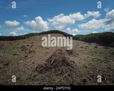 Drone aerial Clear cut logging Olympic Peninsula - Stock Photo