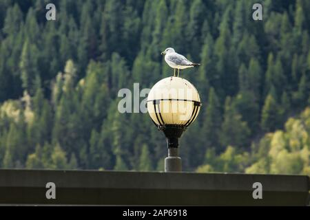 Low angle view of seagull perching on plastic white dirty lamp post against green trees in forest with focus on foreground - Stock Photo