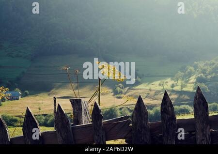 Picturesque view of a dill blossom behind wooden fence and green fields in mountain.Selective focus - Stock Photo