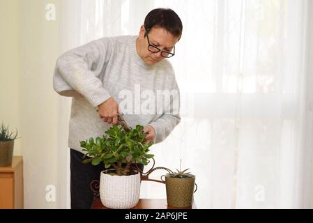 Active happy elderly woman cares at home for plants in the home garden. - Stock Photo