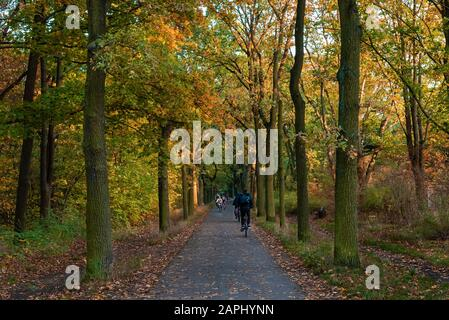 Bike path through an autumnal forest, bike path with cyclists, autumn forest and a bike path - Stock Photo