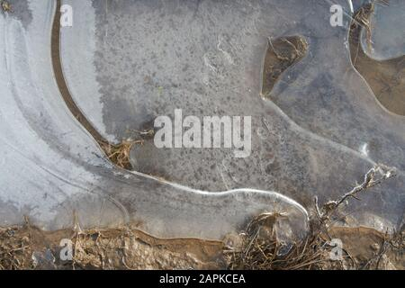 Thin transparent ice on the surface of the puddle - Stock Photo
