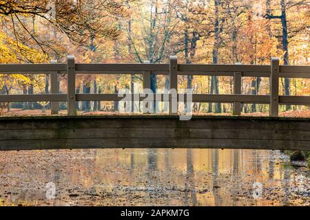 A stunning shot of a wooden bridge above a lake in a park full of trees - Stock Photo