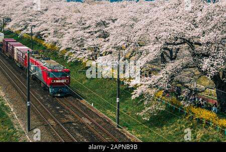 Miyagi, Japan - April 14, 2019. Scenic view of Tohoku train with full bloom of sakura. The act of hanami (cherry blossom) is an ancient tradition that - Stock Photo