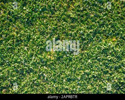 Grass Green Drone Structure Background - Stock Photo