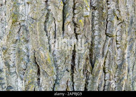 background bark ash - Stock Photo