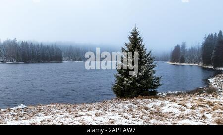 Oder pond in the Harz Mountains with a single tree - Stock Photo