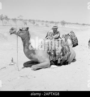 Bedouin at his saddled dromedary. Report /Series: Israel 1960-1965: Bedouins in Beershewa (Beer Sheva). - Stock Photo