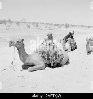 Bedouins with their saddled dromedaries. Report /Series: Israel 1960-1965: Bedouins in Beershewa (Beer Sheva). - Stock Photo
