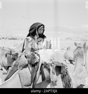 Bedouin woman in the midst of flock of dromedaries. Report /Series: Israel 1960-1965: Bedouins in Beershewa (Beer Sheva). - Stock Photo