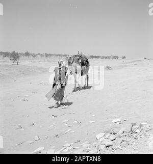 Bedouin walking with saddled dromedary. Report /Series: Israel 1960-1965: Bedouins in Beershewa (Beer Sheva). - Stock Photo
