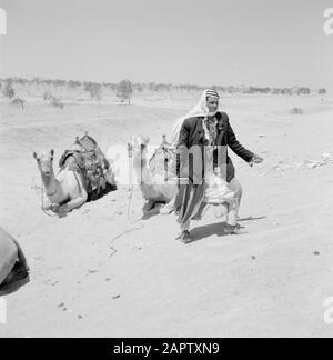 Bedouin at his saddled dromedaries. Report /Series: Israel 1960-1965: Bedouins in Beershewa (Beer Sheva). - Stock Photo