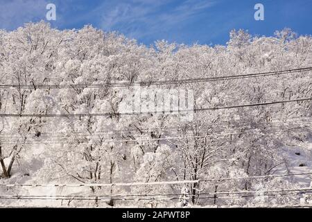 A blue sky soars above fresh snow on a deciduous forest and power lines in rural Niigata, Japan. - Stock Photo